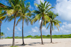 Close up of Miami Beach with Palm trees Royalty Free Stock Photography