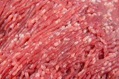 Close up of minced raw meat Stock Images