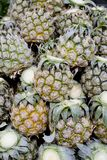 Close up mini pineapple background texture.- small size pineappl Stock Photos