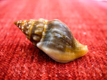 Close-up of a miniature sea shell Stock Image
