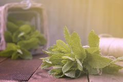 Close up mint leaves on wooden background. Summer drinks or dessert ingredient. Rustic style. Isolated mint. Close up mint leaves on wooden background. Summer stock image