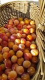 Close up of mirabelle plums Royalty Free Stock Image