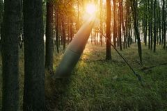 Close up on misfire or unexploded  bomb in the forest Stock Photo