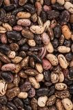 Close up Mix beans background, Mix beans seeds. Seed collection. Healthy food stock photo