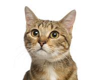 Close up of a Mixed-breed cat, 9 months old, isolated Royalty Free Stock Images