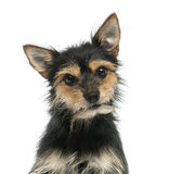 Close-up of a mixed-breed dog looking at the camera, isolated Stock Image