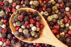 Close up mixed type of peppercorns in wooden spoon on the pepper Royalty Free Stock Photo