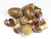 Close up of Mixed wild nuts Royalty Free Stock Image