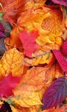 Autumn Leaves. Mobile Phone Wallpaper. Close up of a mixture of Autumn leaves - great range of colours