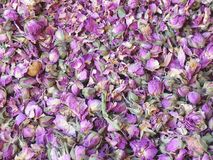 A lot of small dried rosebuds. royalty free stock images