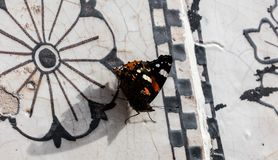 Butterfly,close up. Close up of a monarch butterfly on a marble background stock photos