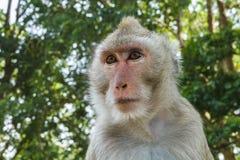 Close up monkey face Stock Image