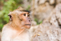 Close-up of monkey face in a nature background. stock photo