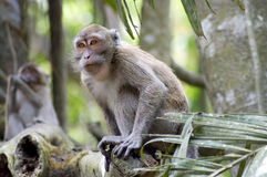 Close-up monkey in jungles Royalty Free Stock Photos