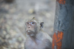 Close up monkey looking something from the car , monkey thailand Stock Photo