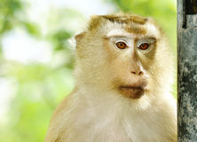 Close-up monkey portriat. With shade light Stock Photos