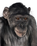 Close-up on a monkey's head Stock Photography