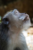 Close-up of monkey the symbol of the chinese new year 2016 stock photo