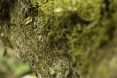 A close-up of mos. Royalty Free Stock Photography