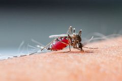 Mosquito sucking blood_set B-2 Royalty Free Stock Photo