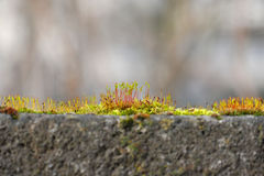 Close Up Of Moss Stock Images