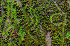Close up of moss Stock Photos