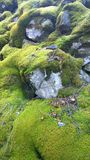 Close up of moss covered rocks Royalty Free Stock Images