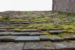 View of pitched roof in England covered in moss. Close up of moss and ferns growing on tiled roof in UK royalty free stock images