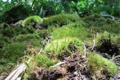Close-Up of Moss and Ferns stock photography