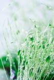 Close-up of moss after rain Royalty Free Stock Photos