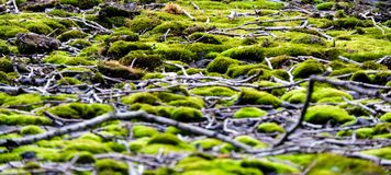 Moss and sticks on rooftop stock images