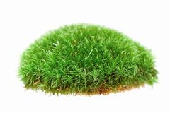 Close up of moss on white background Stock Photo