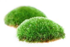 Close up of moss on white background Royalty Free Stock Photos