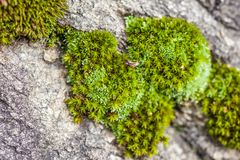 Close-up of mosses royalty free stock photos