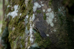 Close-up mossy stone Stock Photography