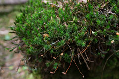 Close-up mossy stone. At mountains Stock Photos