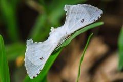 Close up of moth Royalty Free Stock Photos