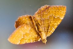 Close up of a moth stock images
