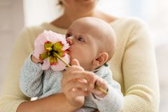 Close up of mother and little baby boy with flower. Family, motherhood and people concept - close up of mother and little baby boy with flower royalty free stock photos