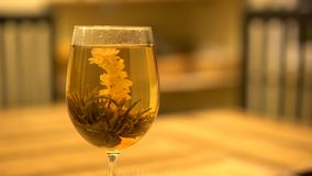 Close up of a special flower tea stock video