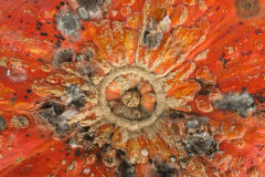 Close up of mould on pumpkin Royalty Free Stock Image