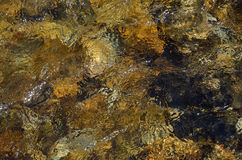 Close-up of the mountain riverbed through clear water flowing Stock Photography
