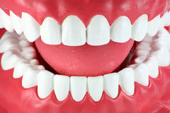 Close-up of a mouth with clean white teeth Royalty Free Stock Photos