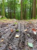 Mountain Bike Tracks In Mud Though A Forest Royalty Free Stock Images