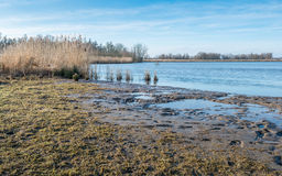 Close up of the muddy banks of a natural lake in wintertime Stock Images