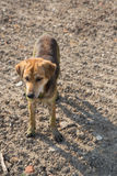 Close up muddy, and wet dog. In the outdoors stock images