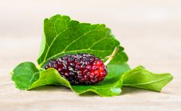 Close up of mulberry with a green leaves on the white background Isolated background. This a fruit and can be eaten in have a re. D and purple color and Royalty Free Stock Photography