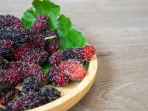 Close up of mulberry with a green leaves on the wooden plate on wooden table. Mulberry this a fruit and can be eaten in have a red. And purple color and Royalty Free Stock Photos