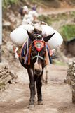 Close-up of an mule caravan, Dudh Kosi valley, Solu Khumbu, Nepal. Close-up an mule caravan on route to Namche Bazar, Dudh Kosi valley, Solu Khumbu, Nepal Stock Photo