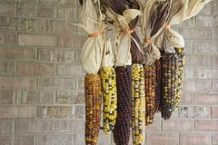 Close-up of Multi-Colored Indian Corn Royalty Free Stock Photo